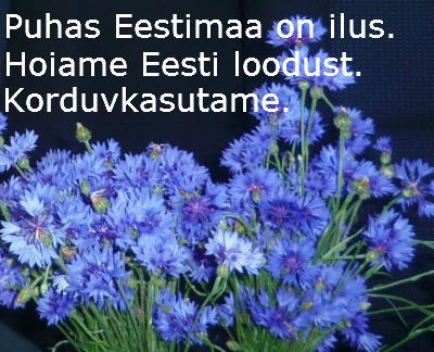 Estonian national flower - cornflower. Save nature - reuse!